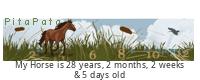 PitaPata Horse tickers