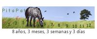 PitaPata Horse (YCSD)